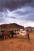 Horses on ranch with dark cloudy sky, Monument Valley, Arizona, USA Stock Photo - Premium Rights-Managednull, Code: 700-08002509