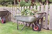 Wheelbarrow full of weeds at farm Stock Photo - Premium Royalty-Freenull, Code: 698-08007926