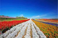 scenic view - Hokkaido, Japan Stock Photo - Premium Rights-Managednull, Code: 859-08008388