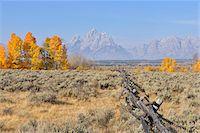 Buck and rail fence with Teton Mountain Range in background, Jackson, Grand Teton, Grand Teton National Park, Wyoming, USA Stock Photo - Premium Royalty-Freenull, Code: 600-08026147