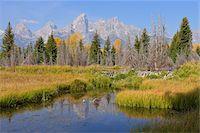Schwabacher Landing with Teton mountain range in background, autumn, Jackson Hole, Grand Teton National Park, Wyoming, USA Stock Photo - Premium Royalty-Freenull, Code: 600-08026152