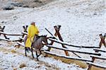 Cowboy riding horse beside fence in snow, Rocky Mountains, Wyoming, USA
