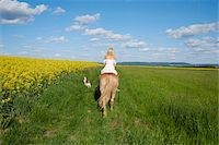 female rear end - Back view of young woman riding a Haflinger horse in a meadow with Kooikerhondje dog walking beside, spring, Bavaria, Germany Stock Photo - Premium Rights-Managednull, Code: 700-08080583