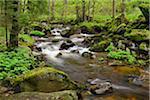 Kalte Bode in Elendstal, Schierke, Harz, Saxony-Anhalt, Germany