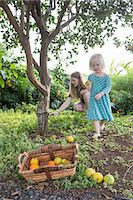 Young woman and toddler daughter harvesting fresh oranges in garden Stock Photo - Premium Royalty-Freenull, Code: 649-08085836