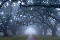 USA, Louisiana, St. James Parish, Vacherie, Oak Alley Plantation Stock Photo - Premium Rights-Managednull, Code: 862-08091527