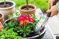 Detail of hand planting flowers and herbs Stock Photo - Royalty-Freenull, Code: 400-08131611