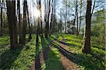 Path through Trees with Sun in Spring, Faulbach, Churfranken, Spessart, Miltenberg-District, Bavaria, Germany