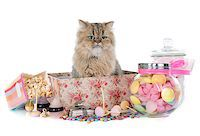 silver box - persian cat in front of white background Stock Photo - Royalty-Freenull, Code: 400-08254273