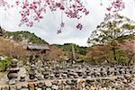Stone Buddha Statues lined up in square, Adashino Nenbutsu-ji Temple, Arashiyama, Ukyo-ku, Kyoto, Japan