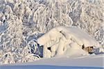 Snow coverd  log cabin in Winter, Liikasenvaara, Kuusamo, Nordoesterbotten, (Suomi), Finland