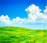 Summer Green Field on the Background of Beautiful Clouds and Blue Sky. Copy Space. Agriculture Concept.