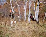 1960s 1970s MAN HUNTER AIMING SHOTGUN AT PHEASANT FLUSHED OUT OF BRUSH BY ENGLISH SETTER BIRD DOG IN AUTUMN LANDSCAPE