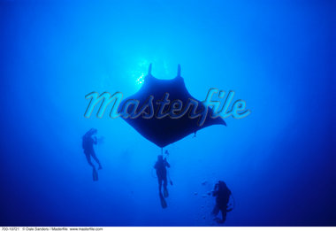 Underwater View of Manta Ray and Divers, Socorro Islands, Mexico    Stock Photo - Premium Rights-Managed, Artist: Dale Sanders, Code: 700-00019721