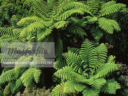 Tropical Rainforest Trees
