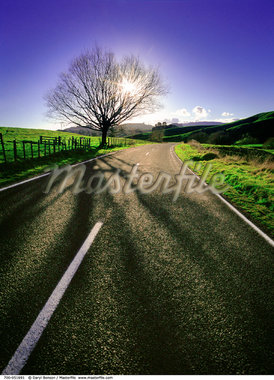 Tree near Side of Road New Zealand    Stock Photo - Premium Rights-Managed, Artist: Daryl Benson, Code: 700-00051691