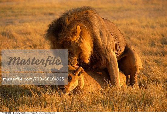 africa ANEMAL SEX animal animal sex animal nature not people animal sex ...