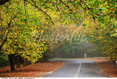 Scenic Road    Stock Photo - Premium Rights-Managed, Artist: R. Ian Lloyd, Code: 700-00168505