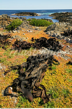 Coastal Vegetation    Stock Photo - Premium Rights-Managed, Artist: R. Ian Lloyd, Code: 700-00459771