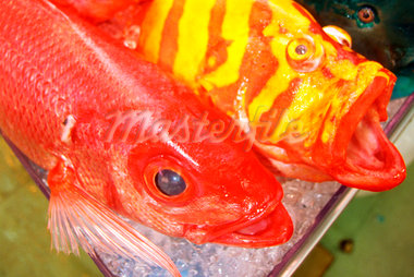Close-up of colorful fish in a market, Okinawa, Japan Stock Photo - Premium Royalty-Freenull, Code: 625-00898610