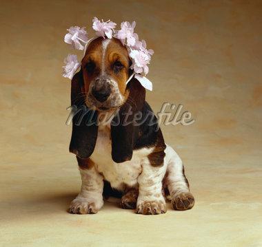 Ένας στολισμένος σκύλος...