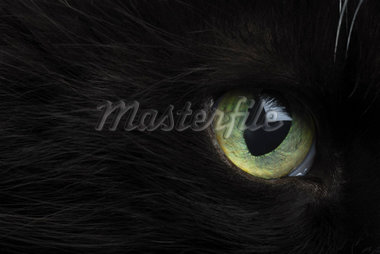 Close-Up of Cat's Eye    Stock Photo - Premium Rights-Managed, Artist: David Mendelsohn, Code: 700-01296305