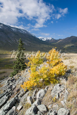 Livingston Range, Bob Creek Wildland Provincial Park, Rocky Mountains, Alberta, Canada    Stock Photo - Premium Royalty-Free, Artist: J. David Andrews, Code: 600-01296487