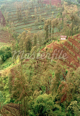 Crops in terraced fields, Java, Indonesia Stock Photo - Premium Royalty-Freenull, Code: 653-01664363