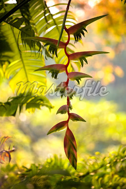 Close-up of Foliage in Singapore Botanical Gardens, Singapore    Stock Photo - Premium Rights-Managed, Artist: R. Ian Lloyd, Code: 700-01879589