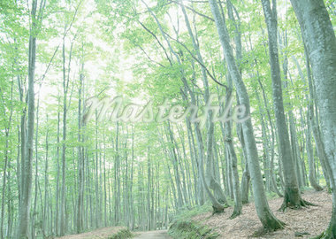 Forest Stock Photo - Premium Royalty-Freenull, Code: 670-02108234