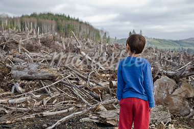Young boy looking out at cleared landscape of fallen trees Stock Photo - Premium Royalty-Freenull, Code: 673-02801436