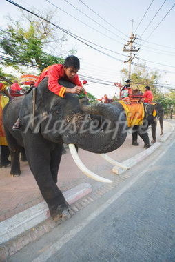 A Mahout Giving a Rose to His Elephant, Ayutthaya Historical Park, Ayutthaya, Thailand    Stock Photo - Premium Rights-Managed, Artist: dk & dennie cody, Code: 700-02828381