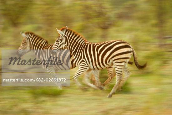 Africa Tales  Wildlife Africa
