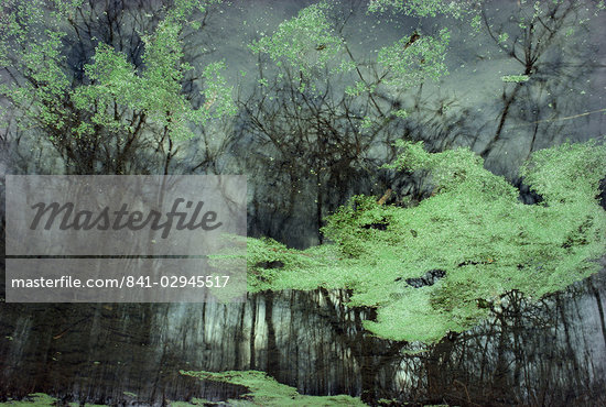 Algae on surface of a pond                                                                                                                                                                               Stock Photo - Premium Rights-Managed, Artist: Robert Harding Images, Code: 841-02945517