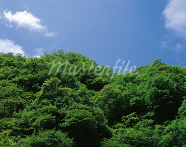 Treetop                                                                                                                                                                                                  Stock Photo - Premium Rights-Managed, Artist: Aflo Relax               , Code: 859-03042979