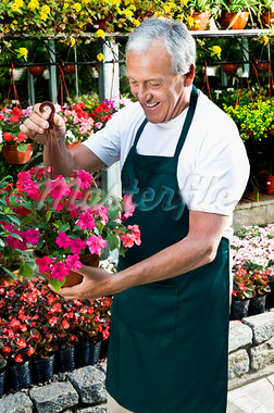 Man holding a hanging basket in a greenhouse                                                                                                                                                             Stock Photo - Premium Rights-Managed, Artist: Glowimages               , Code: 837-03071011