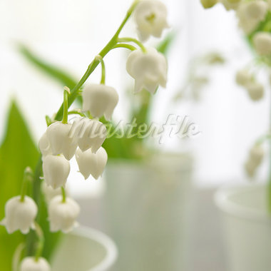 Lilies of the valley,close up Stock Photo - Premium Royalty-Freenull, Code: 689-03124002