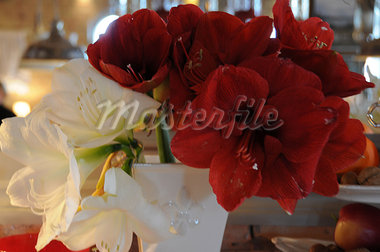 Amaryllis flowers Stock Photo - Premium Royalty-Freenull, Code: 689-03131470