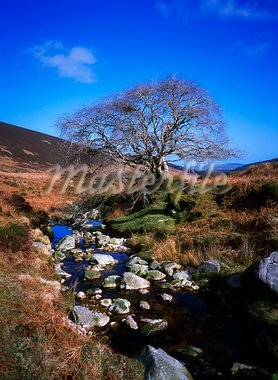 Dargle River Valley, Wicklow Mountains, Co Wicklow, Ireland Stock Photo - Premium Rights-Managed, Artist: IIC, Code: 832-03232518