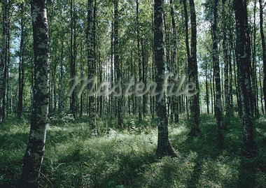 Forest Stock Photo - Premium Royalty-Freenull, Code: 696-03397188