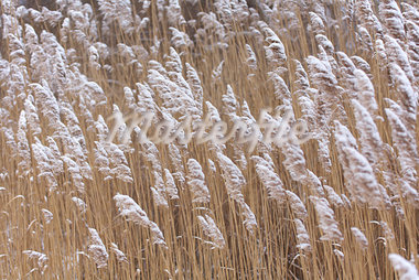 Snow Covered Grass, Rhode Island, USA Stock Photo - Premium Rights-Managed, Artist: Michael Eudenbach, Code: 700-03407550