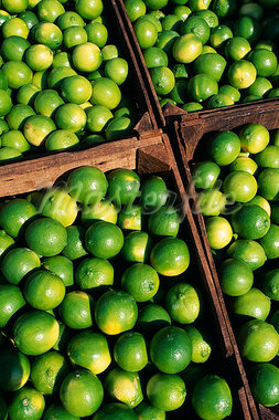 Boxes of limes,Oxkutzcab Market,Yucatan Stock Photo - Premium Rights-Managed, Artist: AWL Images, Code: 862-03437244