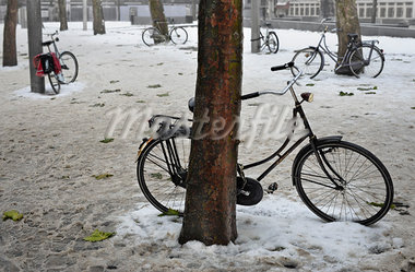 Bicycles Chained to Trees in Winter. near Central Station, Amsterdam, Holland Stock Photo - Premium Rights-Managed, Artist: Hugh Burden, Code: 700-03446054