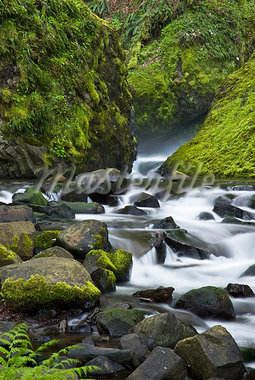 Stream in Bridal Veil Falls State Park, Oregon Stock Photo - Premium Royalty-Freenull, Code: 635-03457621