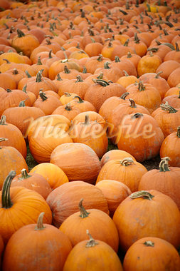 Pumpkin Patch, Ontario, Canada Stock Photo - Premium Rights-Managed, Artist: Derek Shapton, Code: 700-03484970