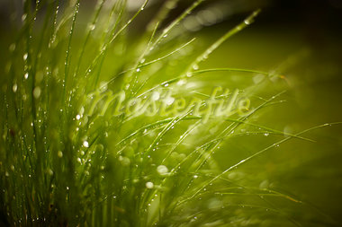 Raindrops on Grass, Stratford, Ontario Stock Photo - Premium Rights-Managed, Artist: Derek Shapton, Code: 700-03484973