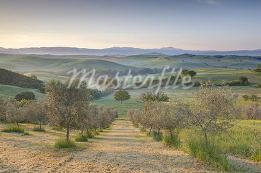 Early morning view across Val d'Orcia from field of olive trees, UNESCO World Heritage Site, San Quirico d'Orcia, near Pienza, Tuscany, Italy, Europe Stock Photo - Premium Rights-Managed, Artist: Robert Harding Images, Code: 841-03505236