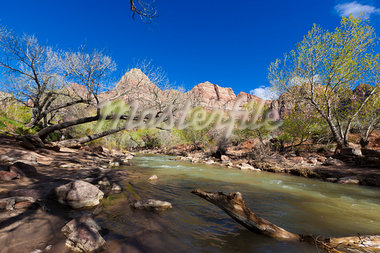 River and Towers of the Virgin, Zion National Park, Utah, USA Stock Photo - Premium Rights-Managed, Artist: Patrick Chatelain, Code: 700-03685763