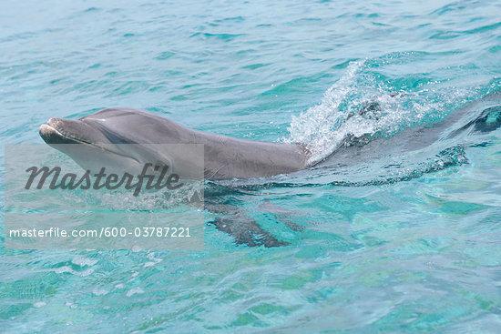 Atlantic+ocean+animals+pictures