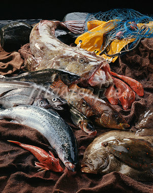 Assorted fish Stock Photo - Premium Royalty-Freenull, Code: 652-03802369